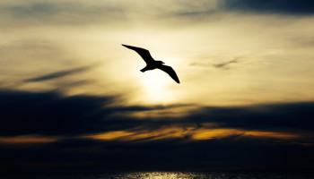 Alex Wigan soaring bird